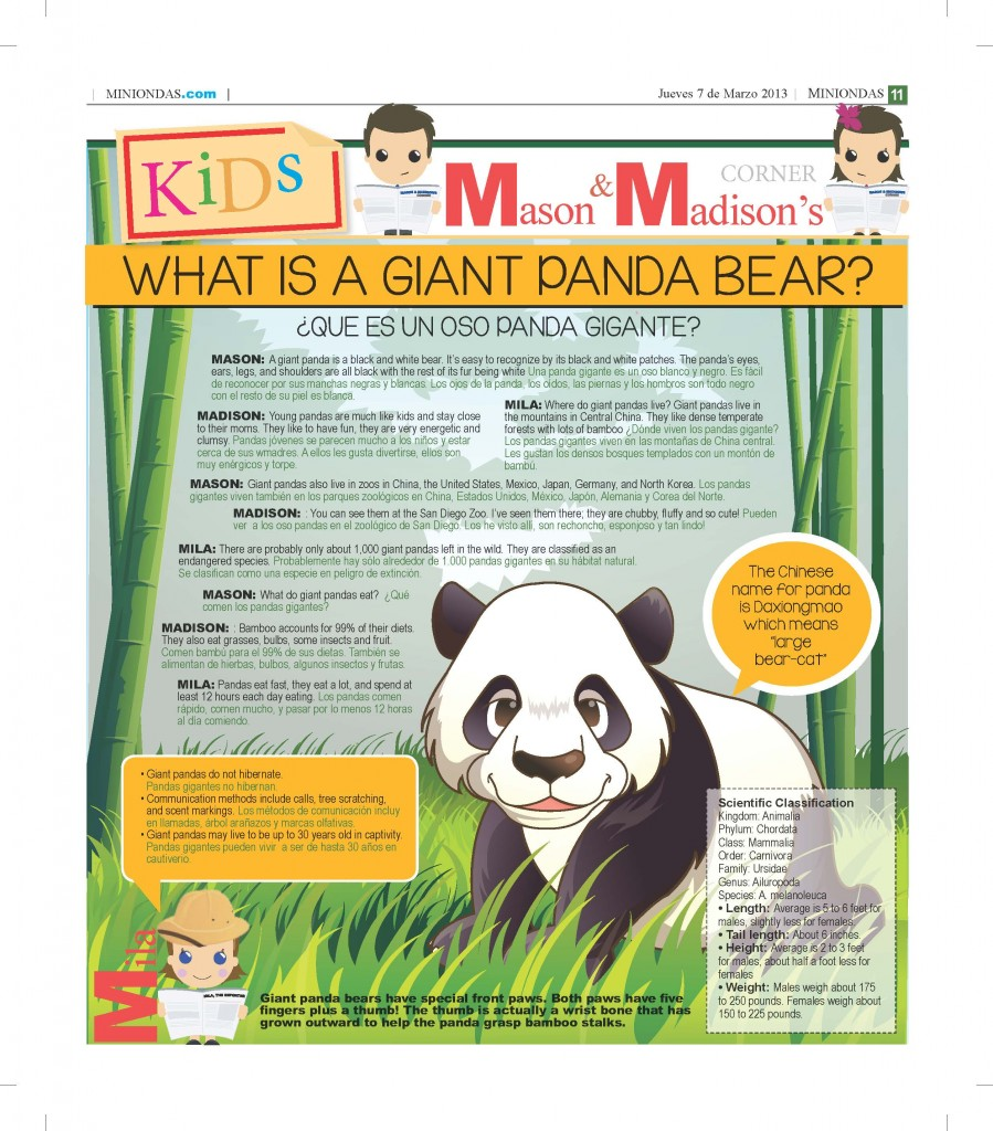 What is a giant panda bear?