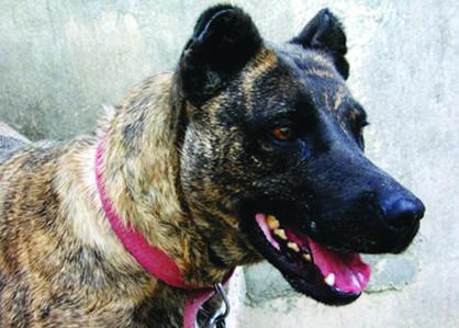 Aumenta debate por ataque de perros