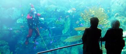 Exhibiciones y Actividades del Aquarium of the Pacific