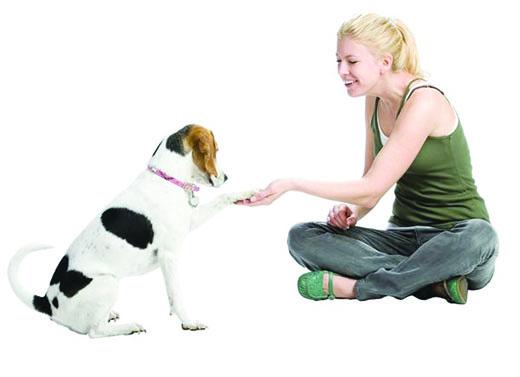 Todo para recibir a un cachorro en casa