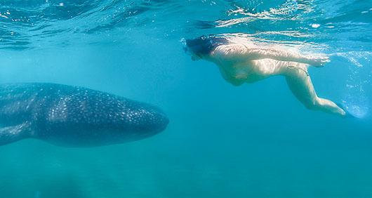 Ballenas que buscan La Paz
