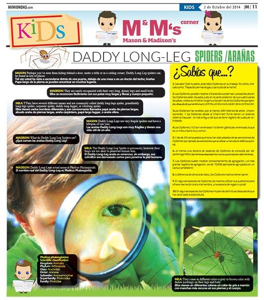 Daddy long-leg spiders/arañas