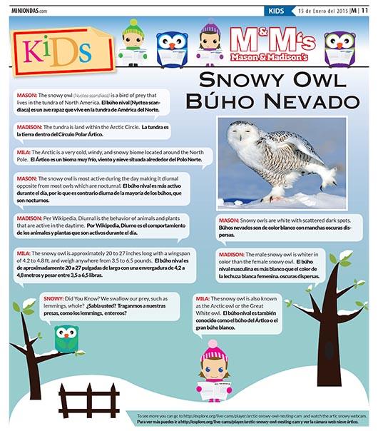 Snowy Owl/Búho Nevado