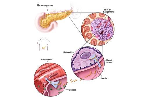 La tecnología de las células STEM
