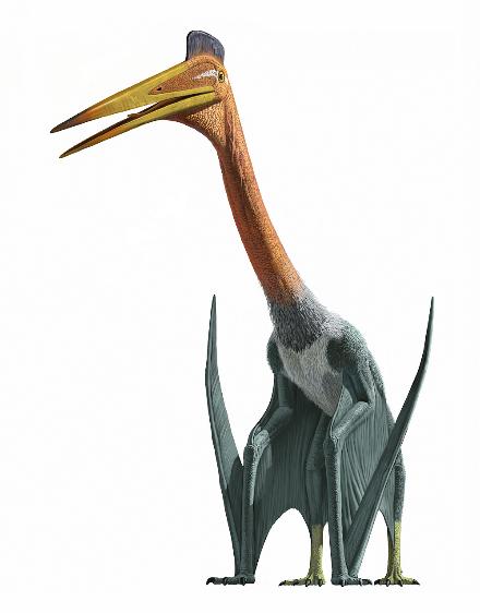 La Mayor Exposición de Pterosaurios en Estados Unidos desde el 3 de Julio al 2 de Octubre del 2016