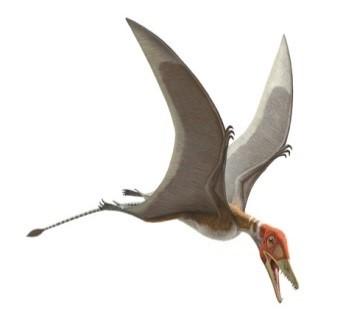 Pterosaurios: Volar en la  Era de los Dinosaurios