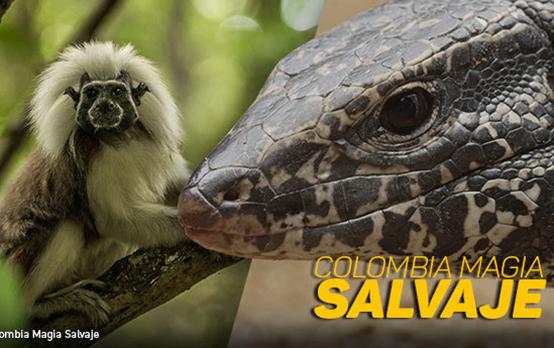 Colombia-Magia-Salvaje-P-549x345